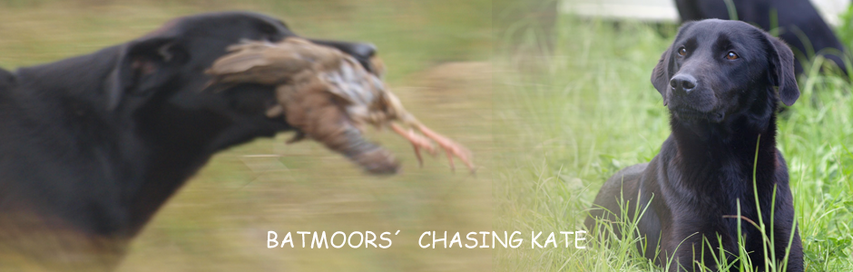 Batmoors´Chasing Kate